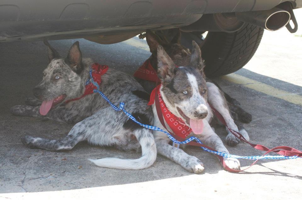 Pups on Trucks #12