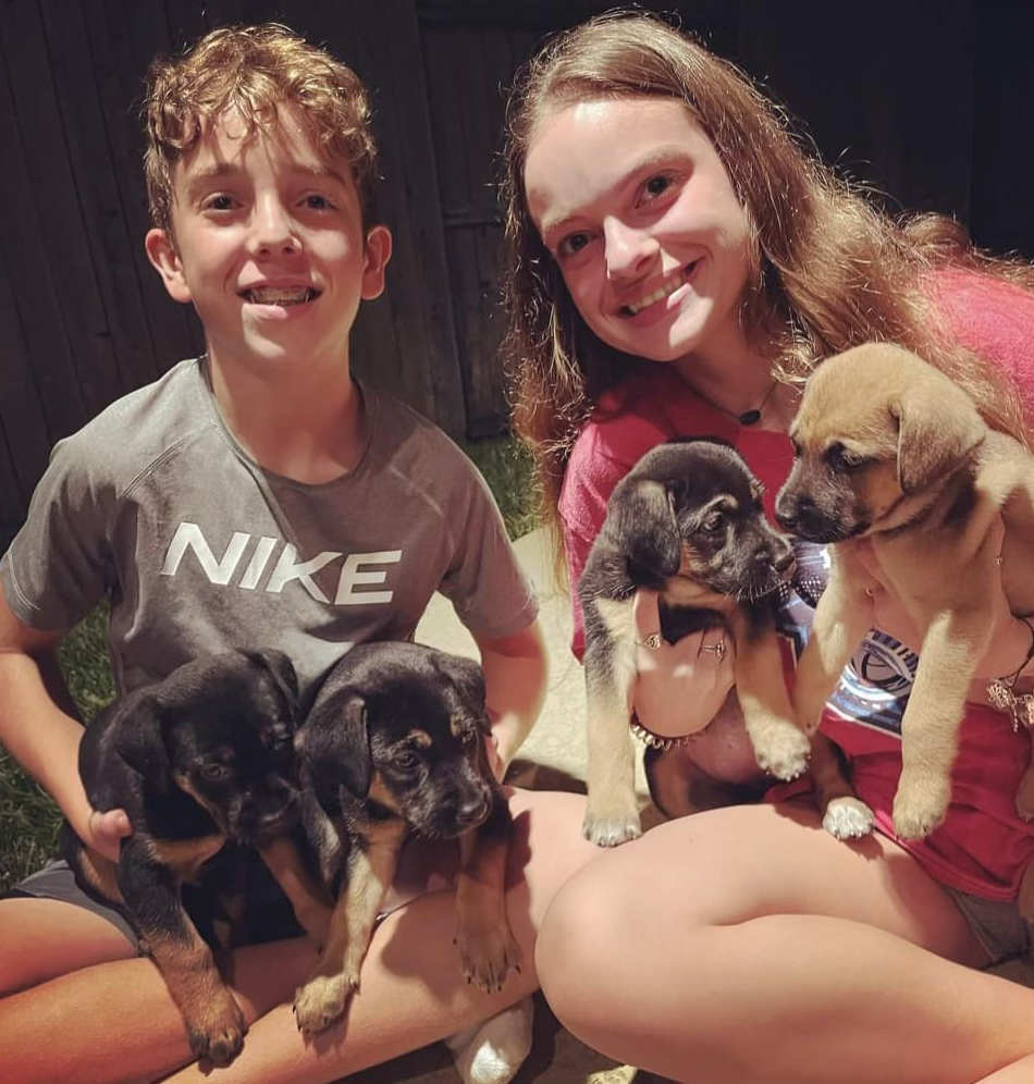 Puppies abandoned in the woods