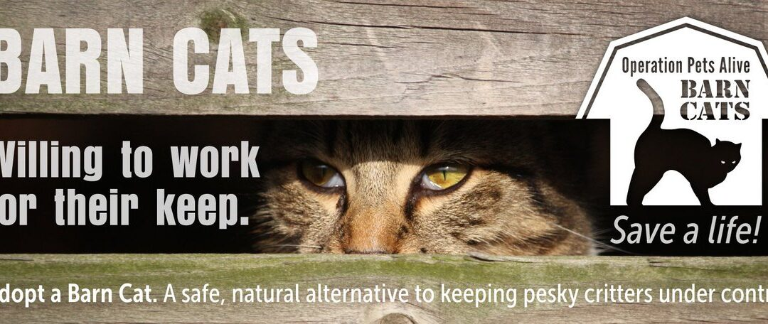 OPA Barn Cats are Willing to Work for Their Keep!
