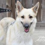 Petra, foster dog